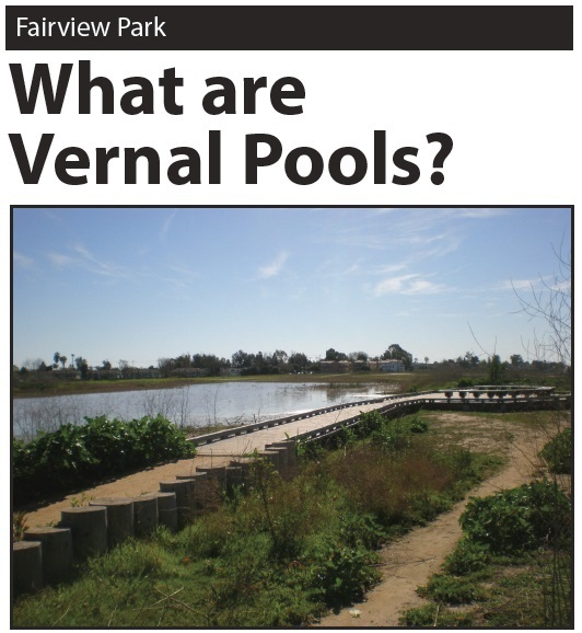 what are vernal pools